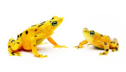 The Race to Protect Frogs from a Deadly Pathogen Gets a Much-Needed Boost