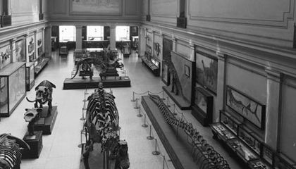 About Deep Time: A Preview of the Natural History Museum's Fossil Hall Renovation