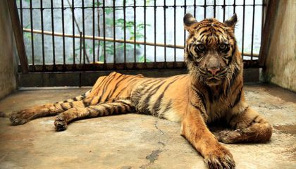 """How Indonesia's """"Death Zoo"""" Got Its Grisly Reputation"""