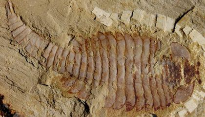 How to Fossilize a Brain
