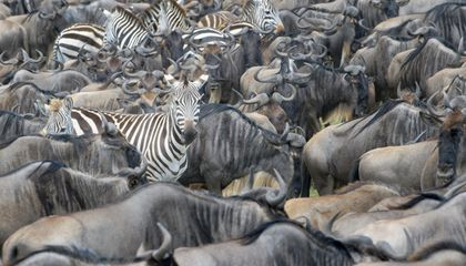 tanzania-great-migration