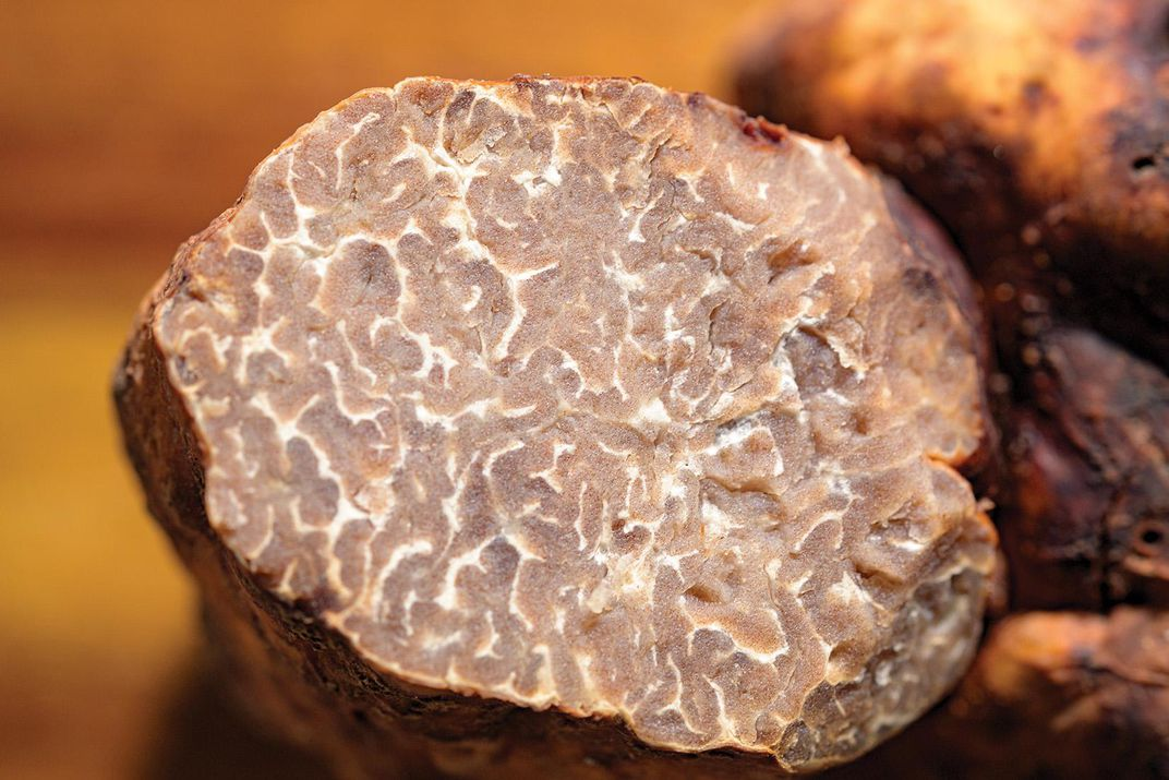 section of a truffle
