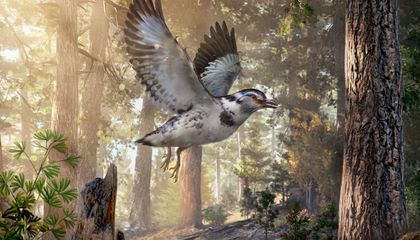 This 127-Million-Year-Old Fossil Links Dinosaur and Bird Evolution
