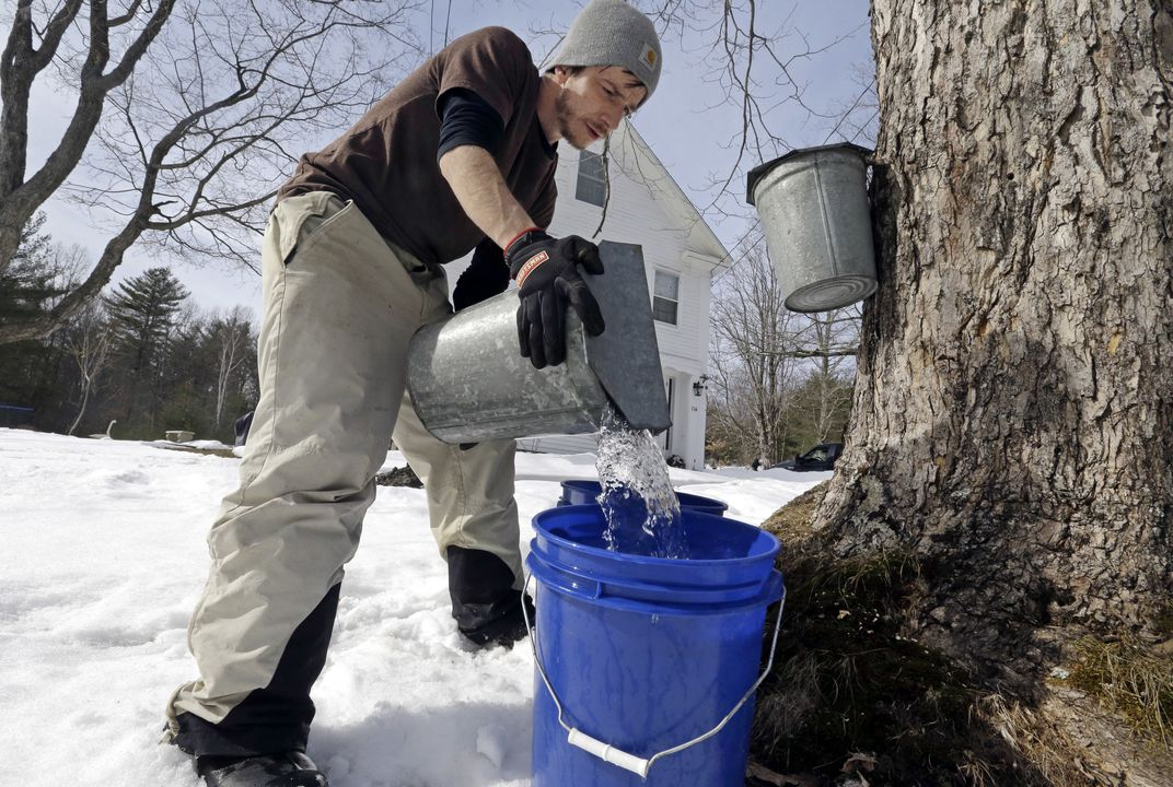 Climate change affects maple syrup producers