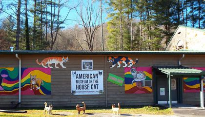 North Carolina Has a House Cat Museum