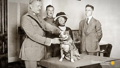 Archival Footage of Parachuting Military Dogs