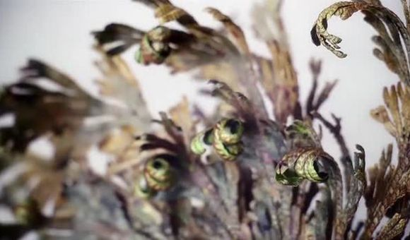 Preview thumbnail for video'In Motion Workshop: Rose of Jericho