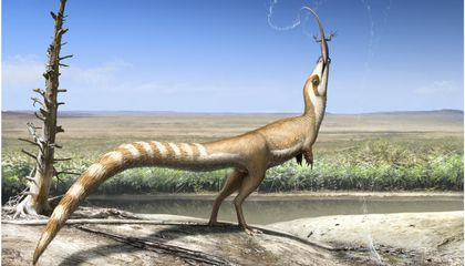 This Adorable Bandit-Faced Dinosaur Will Steal Your Heart