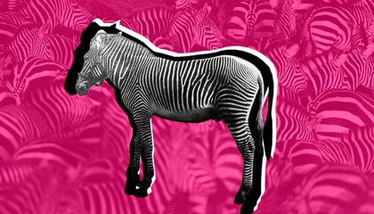 How Dan the Zebra Stopped an Ill-Fated Government Breeding Program in Its Tracks