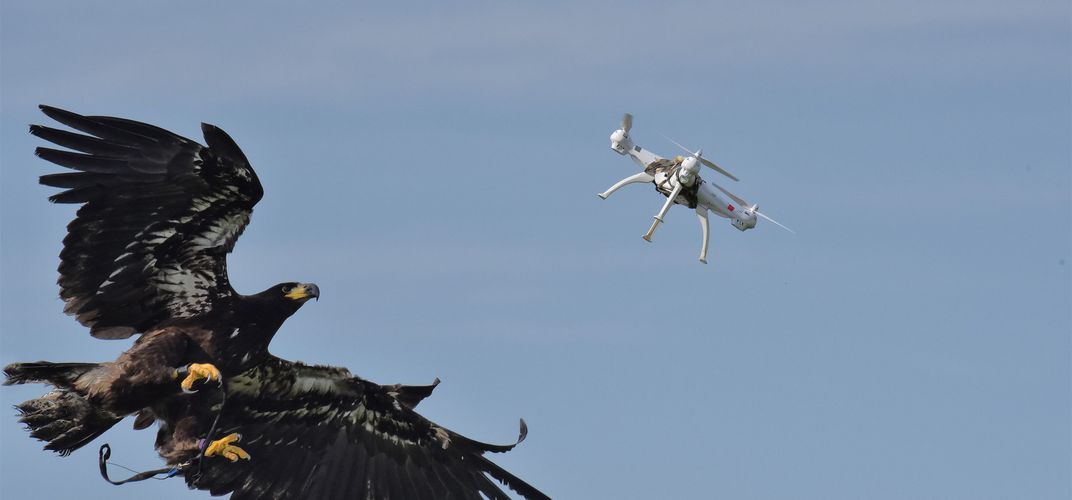 Caption: Attack of the Drone-Snatching Eagles