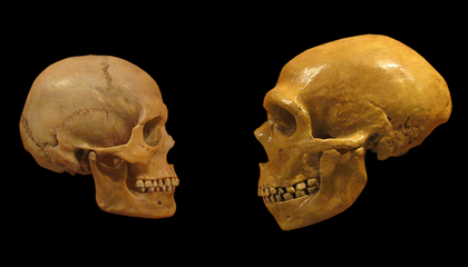 Modern Humans May Have More Neanderthal DNA Than Previously Thought