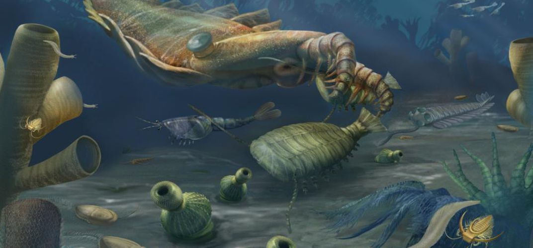 Caption: Fossil Treasure Trove of Ancient Animals Unearthed