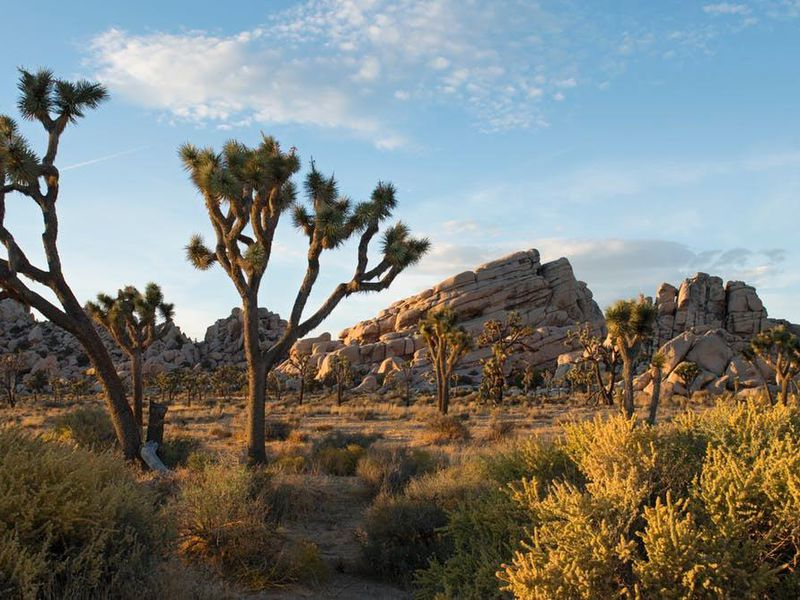 using the sounds of nature to monitor environmental change science