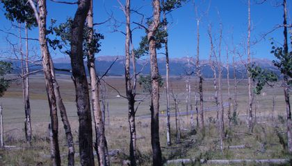 What Does a Dying Forest Sound Like?