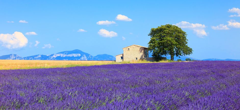 Living in France <p>Enjoy the wonderfully relaxed and graceful lifestyle of Provence during this three-week immersion program in Aix-en-Provence. Live like a local as you learn about France's culture, history, cuisine, and language.</p>