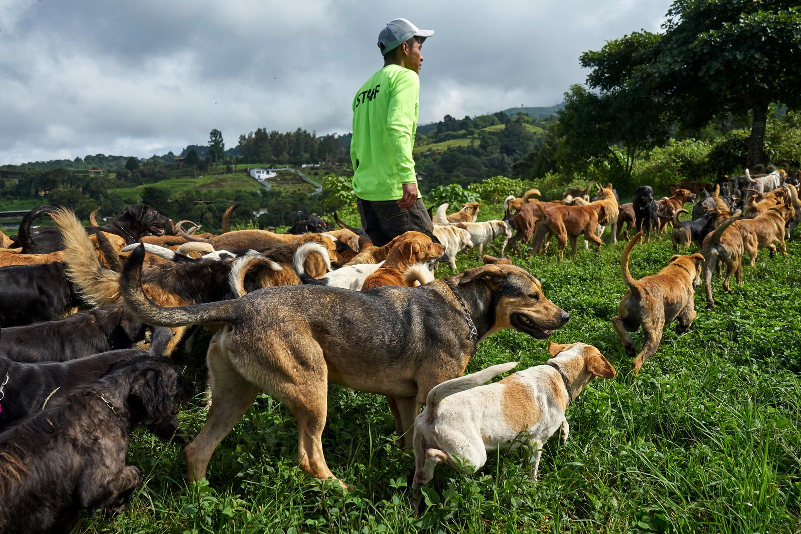 This Costa Rican Paradise Shelters Over 1 000 Stray Dogs Travel