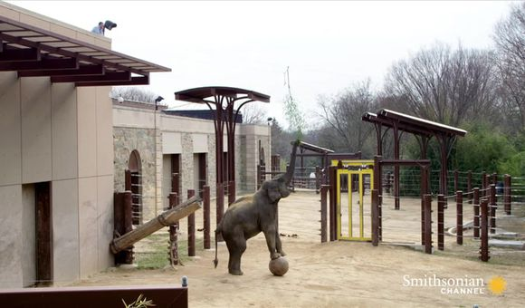 Preview thumbnail for video'Wild Inside the National Zoo: Elephant Intelligence
