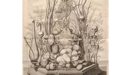 This 17th-Century Anatomist Made Art Out of Bodies