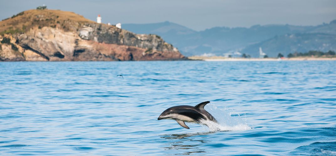 Dolphin following swimming alongside the ship. Credit: Chris Stephenson/Tourism New Zealand