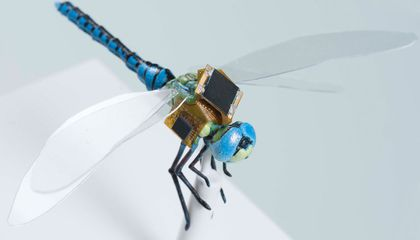 Turning Dragonflies Into Drones
