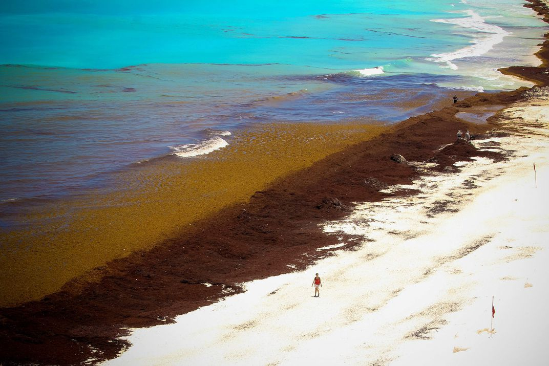 Mexico's Navy is Battling Seaweed Along the Caribbean Coast | Smart