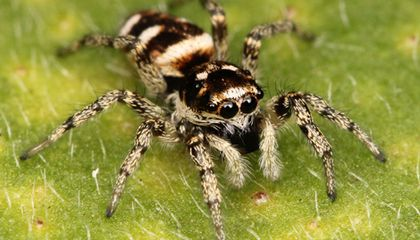 One Giant Leap for Spider-kind