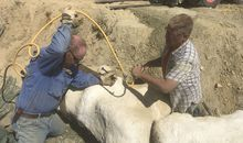 International Expedition Will Excavate the Dino-Rich 'Jurassic Mile'