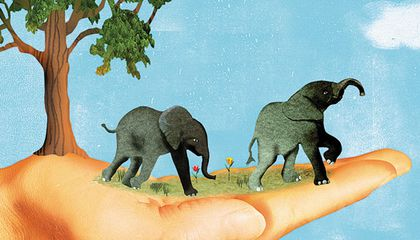 Love, Life, and Elephants: An African Love