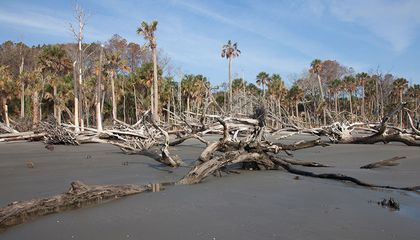 'Tree Farts' Raise Ghost Forests' Carbon Emissions