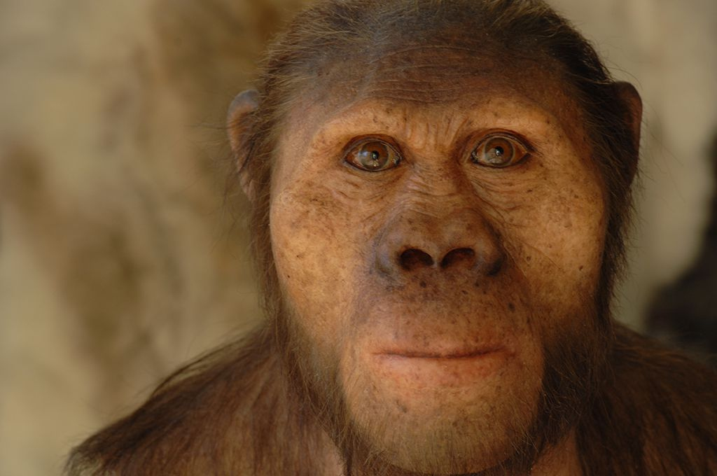 Paleoartist Brings Human Evolution To Life Science