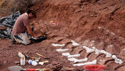 Dinosaur Unearthed in Argentina Could Be Largest Land Animal Ever