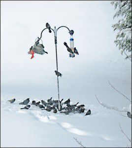 20110520102323bird-feeder-snow-268x300.jpg
