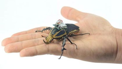 Remote Controlled Bug-Bots Could be First Responders of the Future