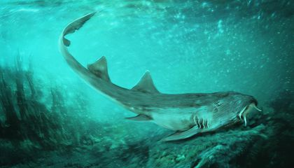 New Prehistoric Shark Species Discovered Alongside Sue the T. Rex