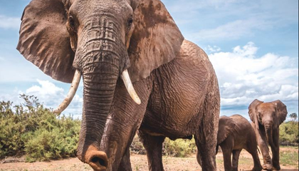 Earthquake-Monitoring Technology May Help Protect Elephants from Poachers