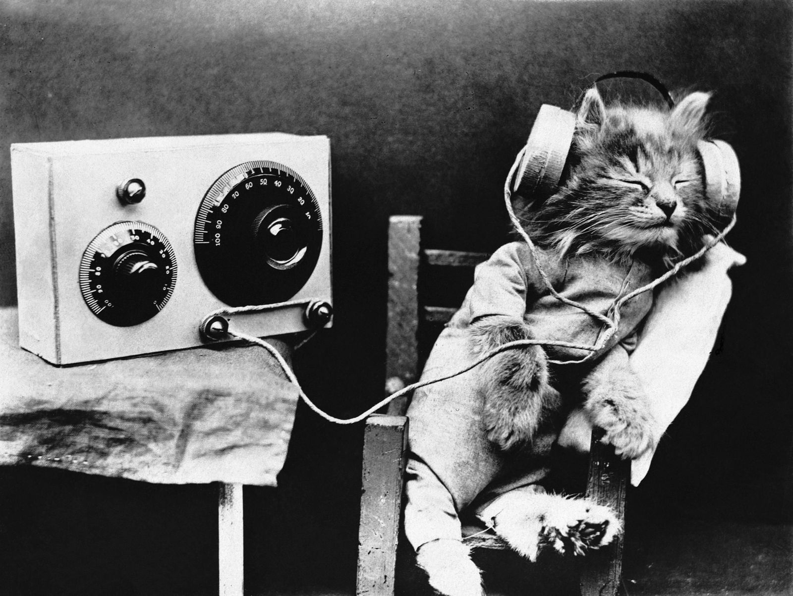 Here S What Music Specially Composed For Your Cat Sounds Like Smart News Smithsonian Magazine