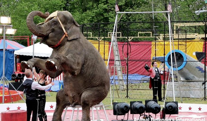 "Lawsuit Seeks ""Personhood"" for Three Elephants"