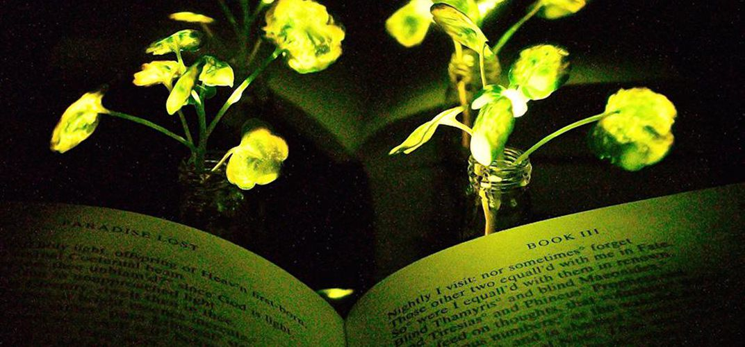 Caption: Glowing Plants Could One Day Light Our Homes