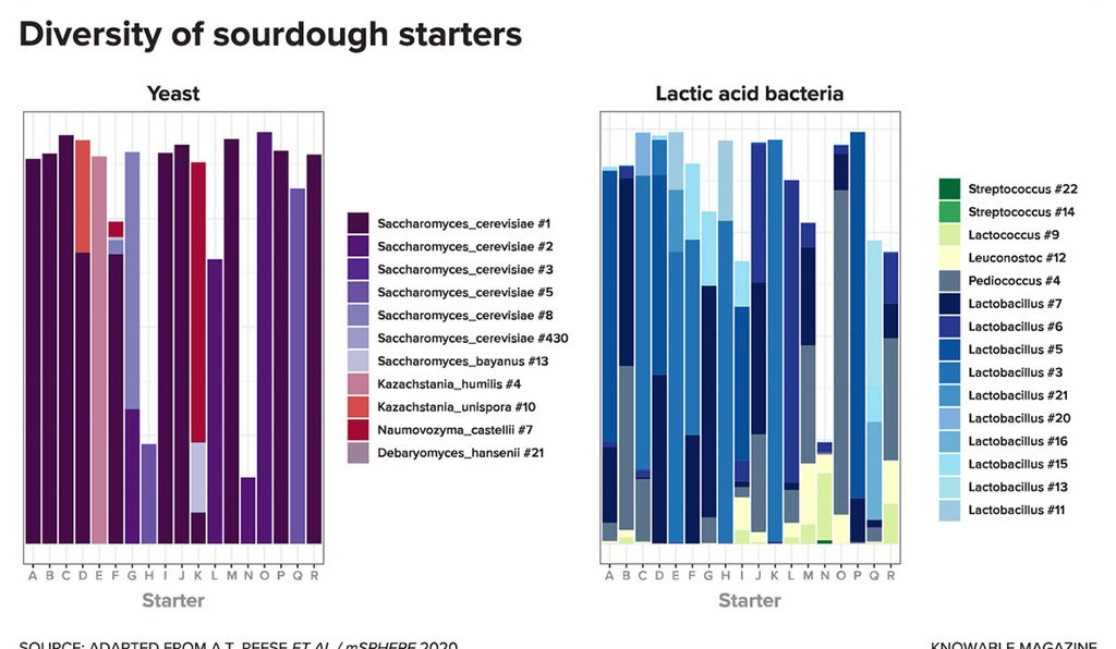This chart shows yeasts (left) and lactic acid bacteria (right) that make up 18 different sourdough starters created by professional bakers around the world. The bakers began their starters with identical flour, yet ended up with dramatically different collections of sourdough microbes. Each genetically distinct species or strain is shown in a different color; note that the white space at the top of each bar represents microbes too rare to track separately.