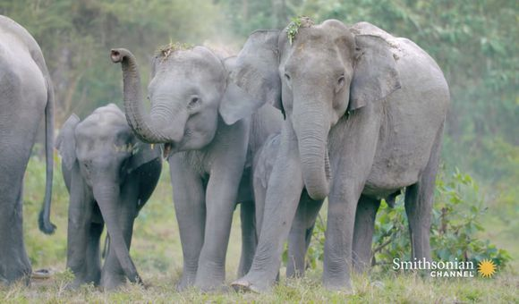 Preview thumbnail for video'This Salt Lick Doubles as a Reunion Spot for Elephants