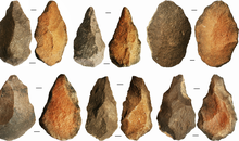 Laziness May Have Contributed to the Decline of Homo Erectus