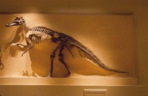 20110520083136edmontosaurus-national-museum-natural-history-300x195.jpg