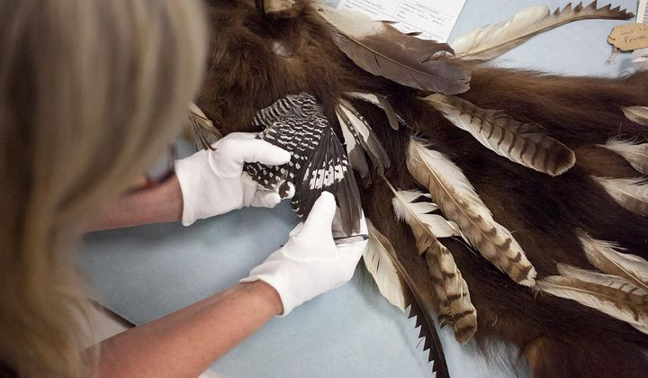 What feathers on Native American Treasures Reveal