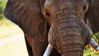 $2 Million in Ivory Seized From Manhattan Jewelers
