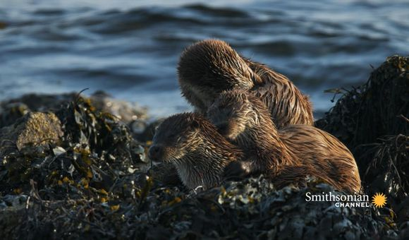 Preview thumbnail for video'These Twin Otter Pups Are Learning How to Adult