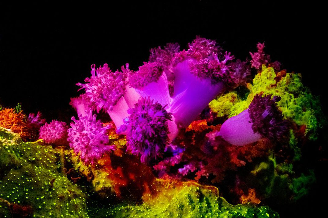 Coral Reef in Dauin