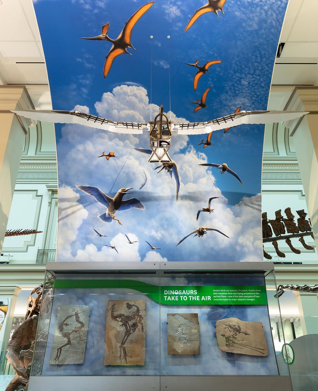 A museum exhibit display of flying dinosaurs.