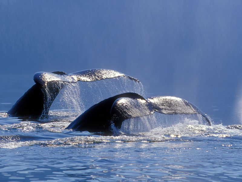 What Humpback Whales Can Teach Us About Compassion | Science