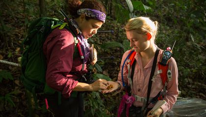 Lucia Torrez and Grace Davis identify fruit that monkeys on Barro Colorado Island in Panama have been eating. Do primate leaders know where the best fruiting trees are to be found? Credit: Sean Mattson, STRI