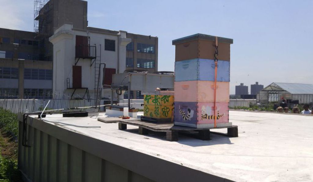 Beehives on Brooklyn Grange's urban farm, which covers the entire 65,000-square-foot building.